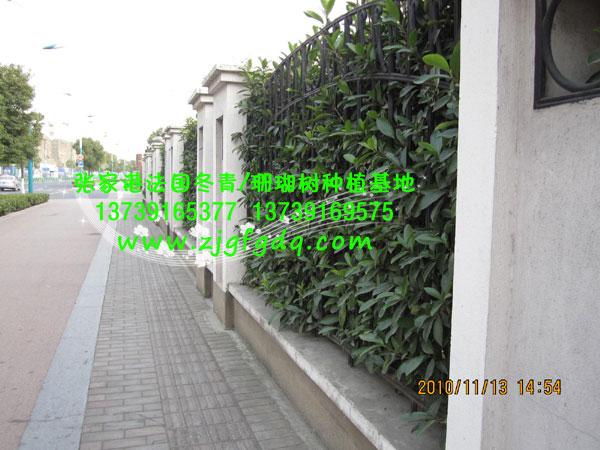木格栅景观绿篱围墙